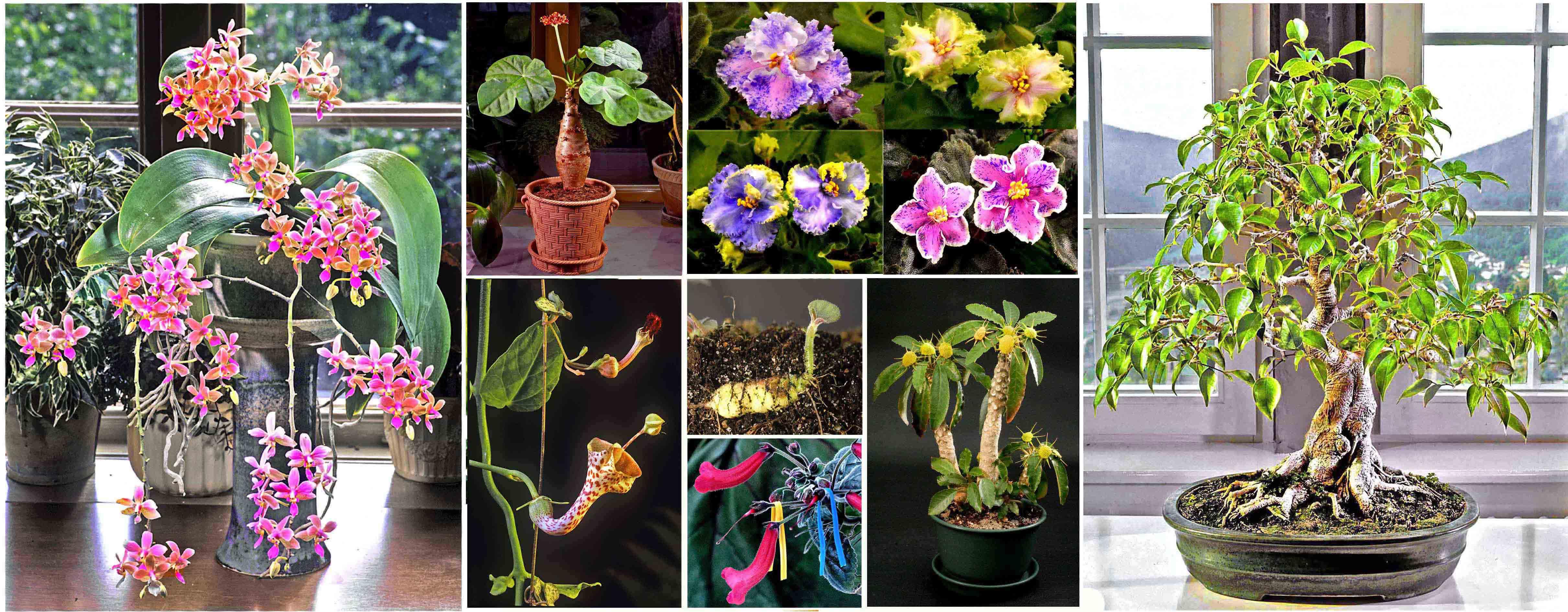 Växter för en ny tid. En webb-bok av Tord  Hubert.