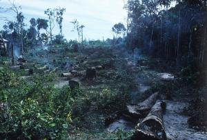 Costa Rica.Skogsavverkning.